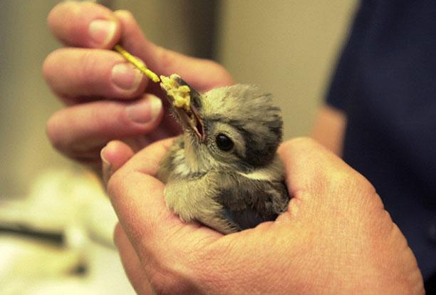 حیوانات در بیمارستان و کلینیک های تخصصی - پرنده کوچک