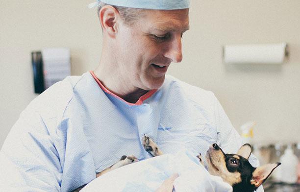 حیوانات در بیمارستان و کلینیک های تخصصی - سگ در اتاق عمل