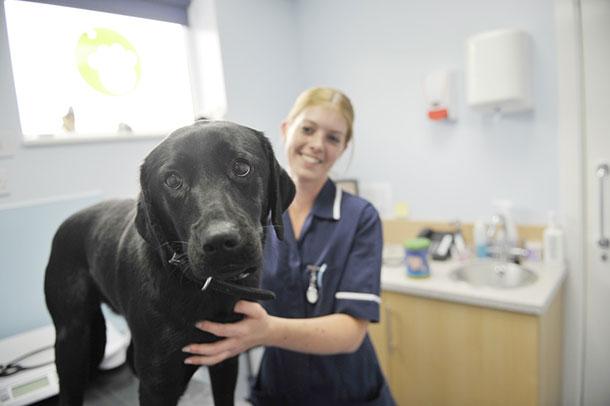 حیوانات در بیمارستان و کلینیک های تخصصی - سگ افسرده و افسردگی در حیوانات
