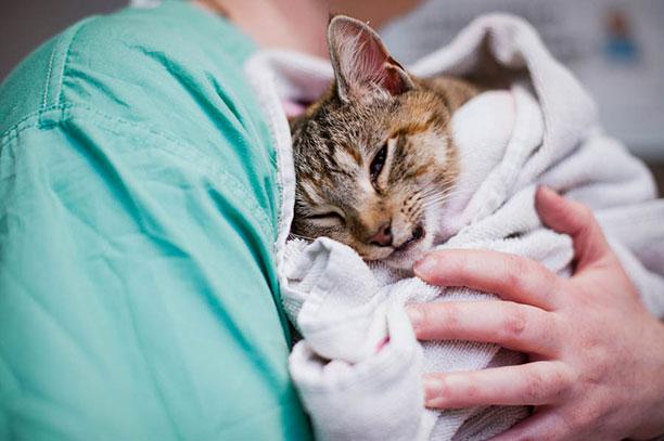 حیوانات در بیمارستان و کلینیک های تخصصی - گربه