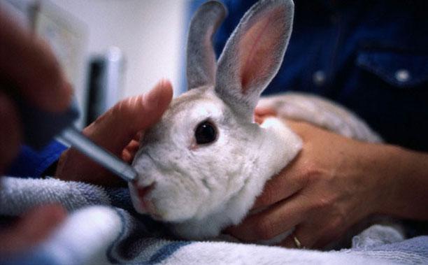 حیوانات در بیمارستان و کلینیک های تخصصی - خرگوش