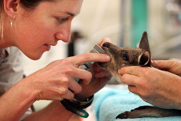 حیوانات در بیمارستان و کلینیک های تخصصی - آهو