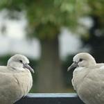 تأثیر مقایسه بر شادمانی | کبوتر با کبوتر، باز با باز؟