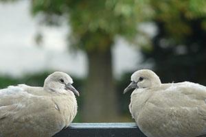 کارگاه زندگی شاد - کبوتر با کبوتر باز با باز؟