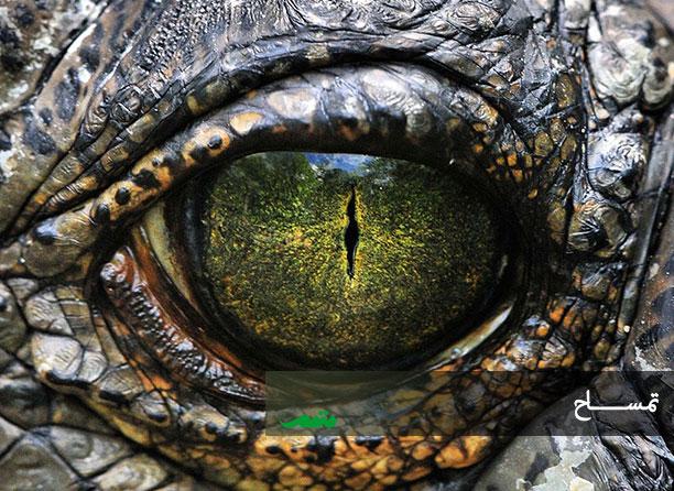 چشم های تمساح