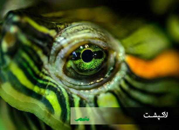 چشم لاکپشت