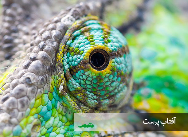 تصاویر چشم حیوانات