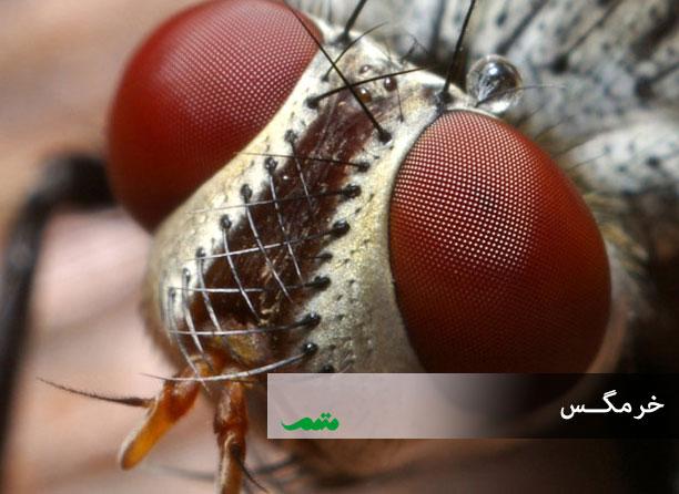 عکسبرداری حشرات