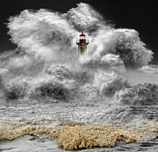 عکس فانون دریایی در میان موجهای دریا - عکس توسط فابریس روبن ثبت شده