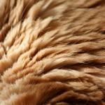 تصاویری از بافت های شگفت انگیز بدن حیوانات