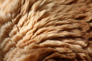 تصاویر نزدیک از بدن حیوانات