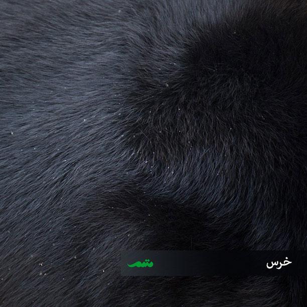 پوست بدن خرس