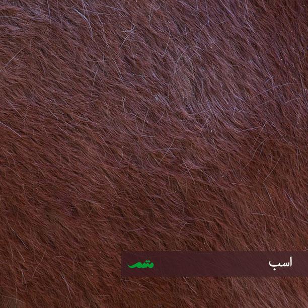 بدن اسب