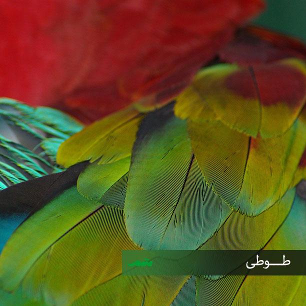 پرهای بدن پرندگان