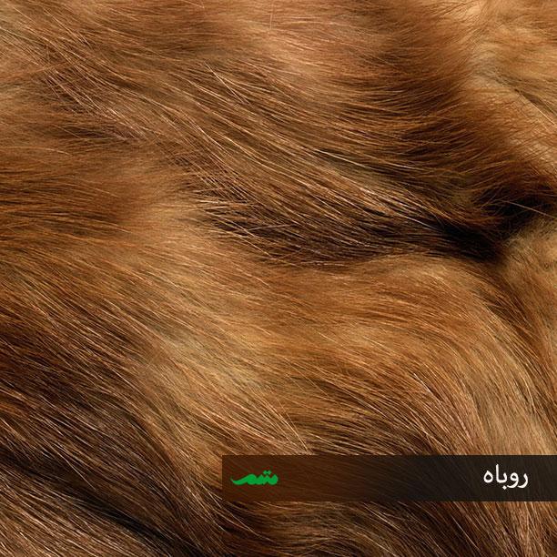 تصاویر حیوانات