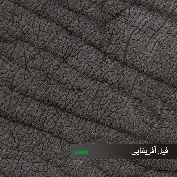 پوست بدن فیل آفریقایی