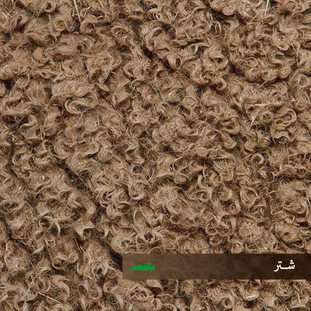بافتهای پوششی در بدن شتر
