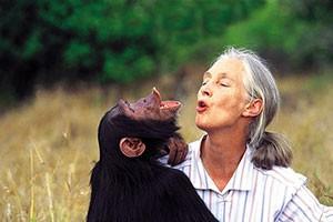 فیلم بازگشت شامپانزه به جنگل