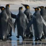 مهارت کار تیمی (1): درباره تفاوت تیم و گروه و بحثهای غیرضروری دیگر!
