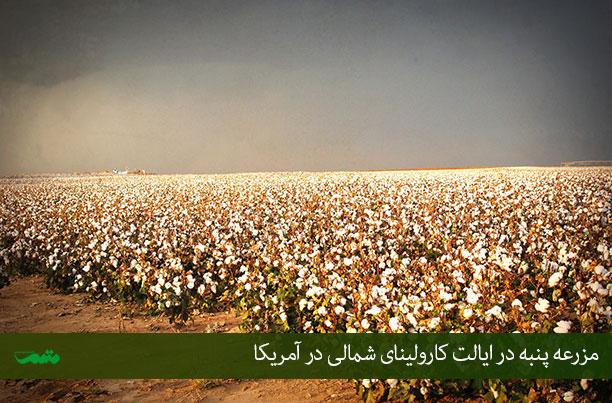 عکس مزارع پنبه