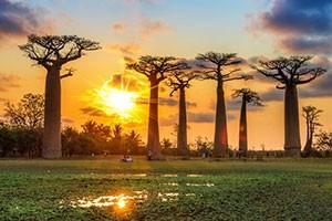 سفر تصویری به ماداگاسکار
