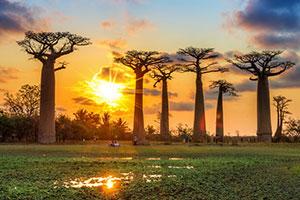 سفر تصویری به جزیره ماداگاسکار