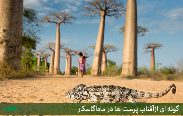 راهنمای گردشگری ماداگاسکار