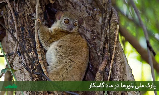 حیات وحش ماداگاسکار