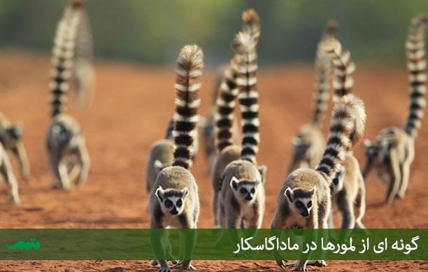 راهنمای سفر به ماداگاسکار - حیوانات ماداگاسکار - خاطرات سفر به ماداگاسکار