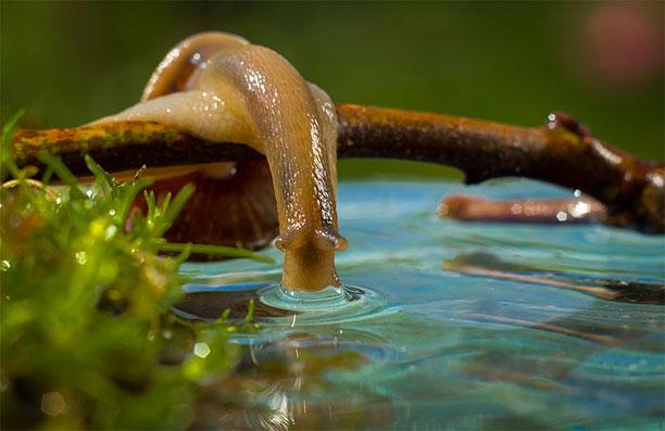 نتیجه تصویری برای حلزون حشره خوار