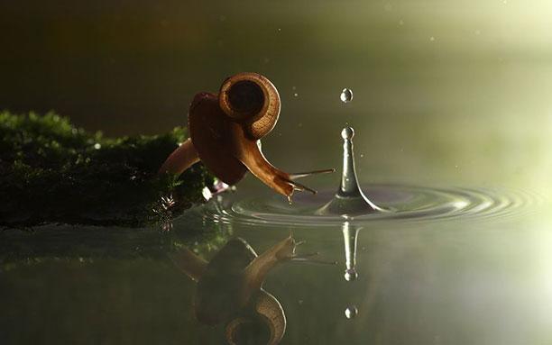 در پاسخ به این سوال که حلزون چند سال عمر می کند باید ابتدا ببینیم محیط زیست آنها کجاست