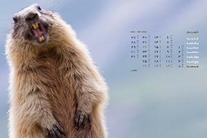 تصاویر زیبای حیوانات برای والپیپر