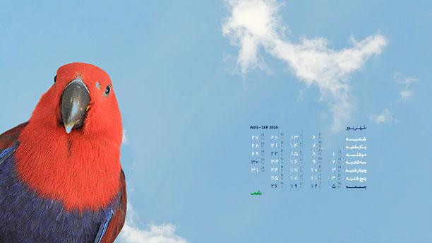 تصاویر پرندگان برای دسکتاپ