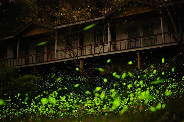 تصاویری از درخشش فسفری کرم های شب تاب