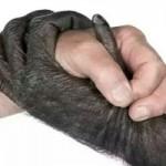 شخصیت شناسی حیوانات: گزارشی از تلاش برای ارزیابی ویژگی های شخصیتی حیوانات