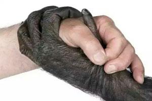 شخصیت شناسی حیوانات - ویژگی های شخصیتی حیوانات