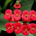 عادتهای کوچک زندگی: گل و گیاه در محیط کار و خانه