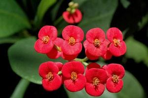 گل و گیاه در خانه و محل کار