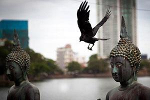 سفر تصویری به سری لانکا