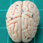 تعریف شناخت (Cognition) چیست؟