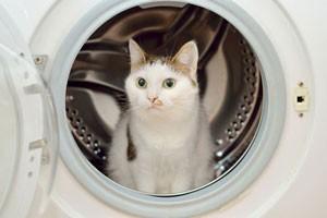 تعریف سیستم های پیچیده - نسیم طالب، گربه و ماشین لباسشویی