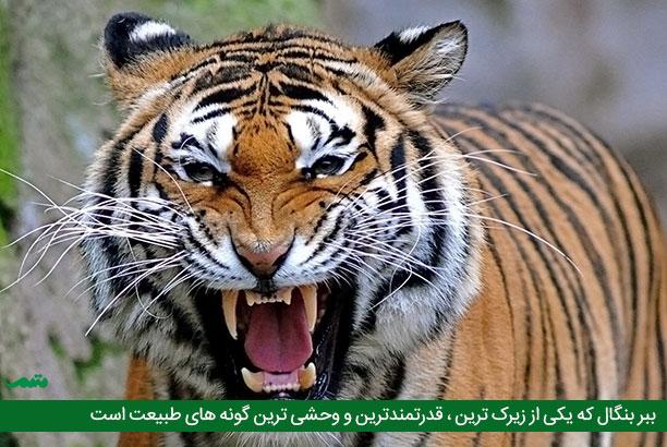 وحشی ترین حیوانات دنیا