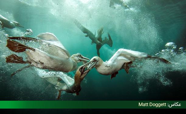 تصاویر حیوانات دریایی