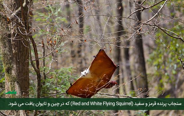 flying_squirrel_mtm09