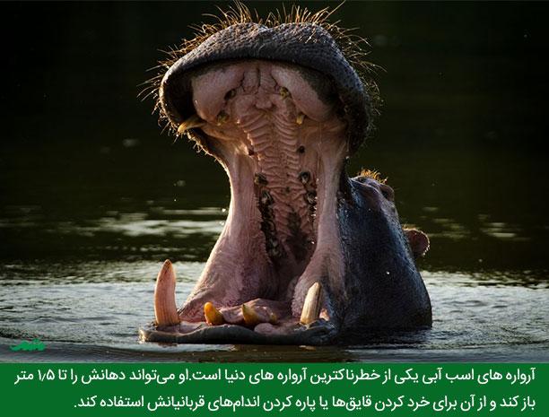 وحشی ترین حیوانات عکس