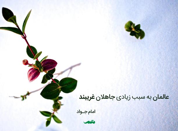 qoute_012_mtm_04_0016061