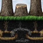 آشنایی با ریشههای تعارض