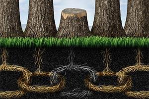 آشنایی با ریشه های تعارض