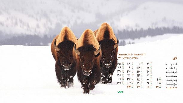 تقویم والپیپر - تصاویر حیوانات