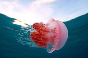 تصاویر عروس دریایی